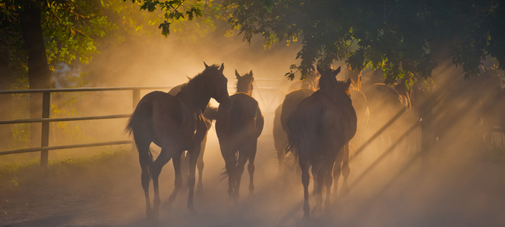 Group of horses near a fence at sunset