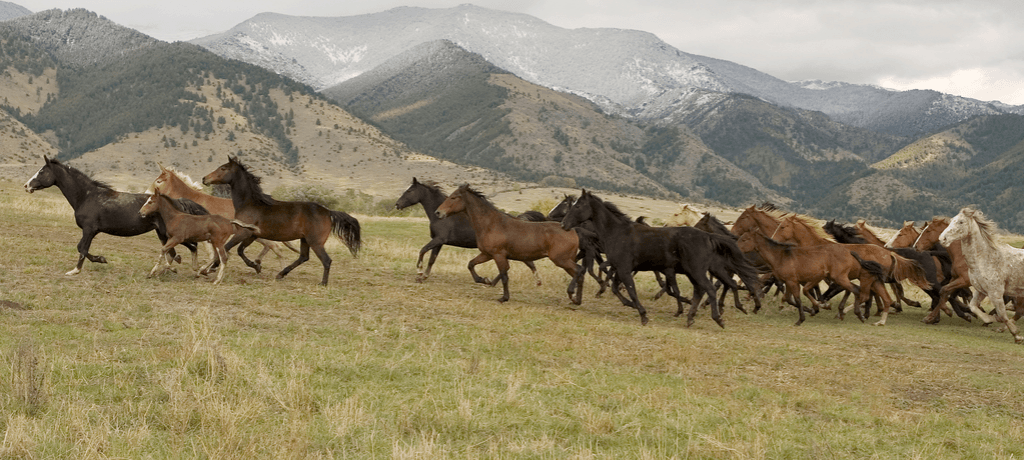 A herd of horses running on the mountainside